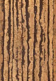 13mm Tiger cork click flooring